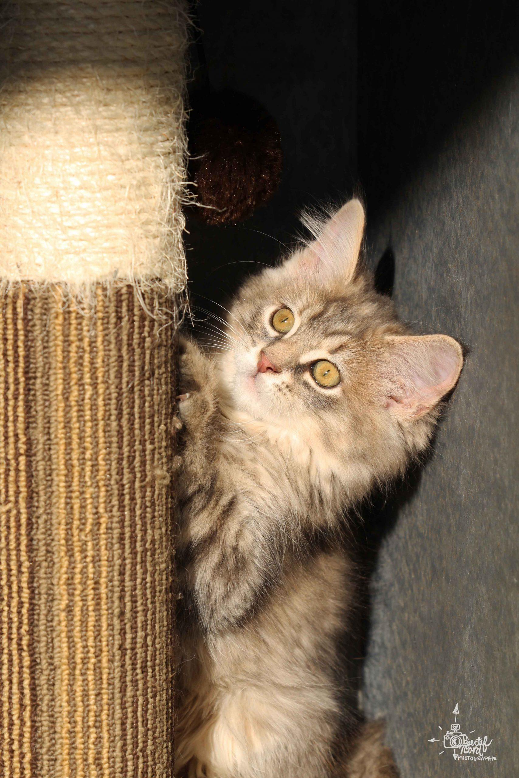 SPCA3-Char-Adoption